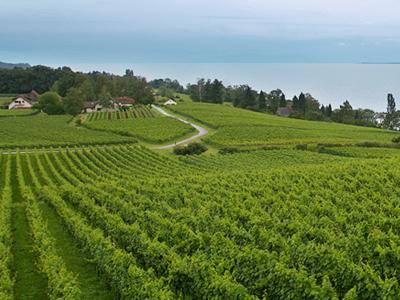 Die Weinberge vom Weingut Aufricht / © Robert und Manfred Aufricht GbR