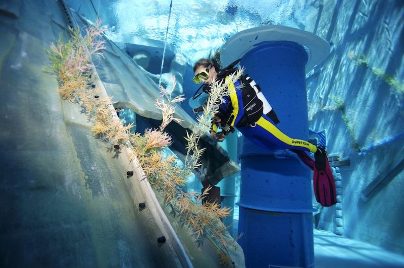 Faszinierende Unterwasserwelt im monte mare Rheinbach / © Phil Simha sunfishproductions