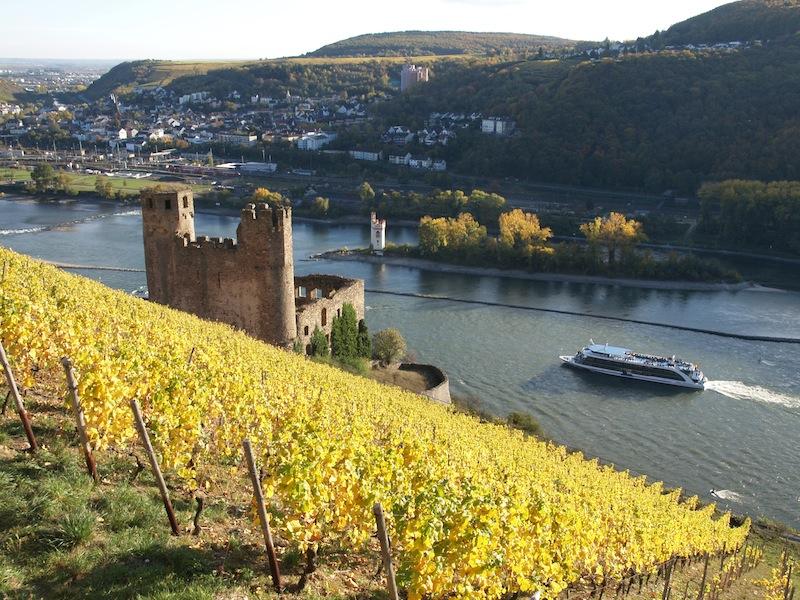Beste Lagen: Ruedesheimer-Schlossberg mit Ehrenfels / © RUED AG
