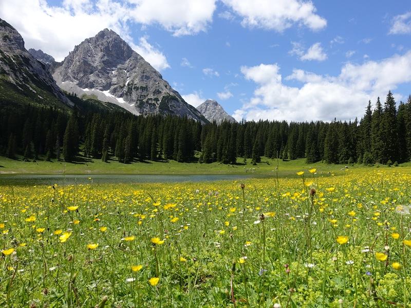 Wo die Sonne scheint, die Wiesen grünen und die Kräuter blühen.... / © Redaktion FrontRowSociety.net