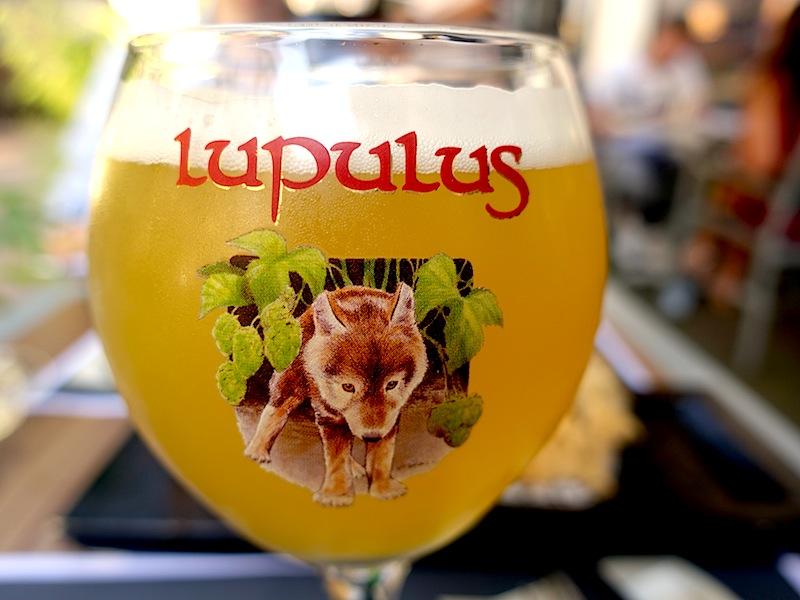 Einfach mal tasten: Ein süffiges Bierchen. Das Lupulus mit seinenr 8 Volumenprozenten / © Redaktion FrontRowSociety.net