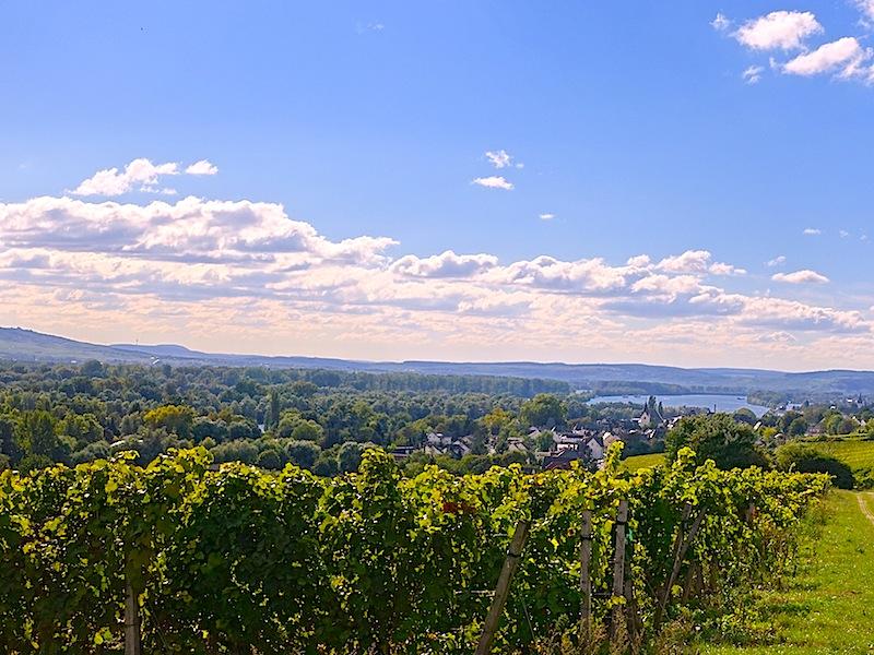 Der Rheingau: Heimat von großartigen deutschen Weinen