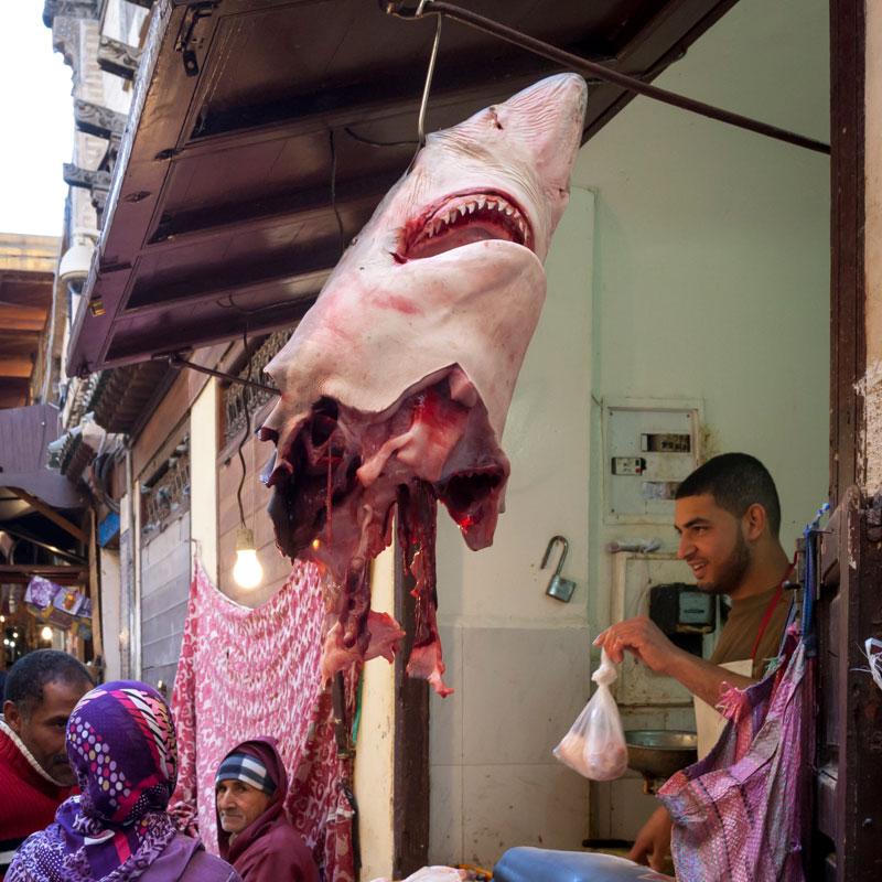Fischhandel einmal anders als wir ihn kennen / © FrontRowSociety.net, Foto Georg Berg