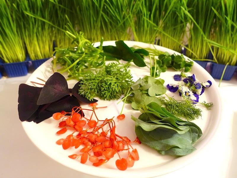 Für interessierte Besucher gab es eine kleine Kräuterkunde / © Redaktion FrontRowSociety.net