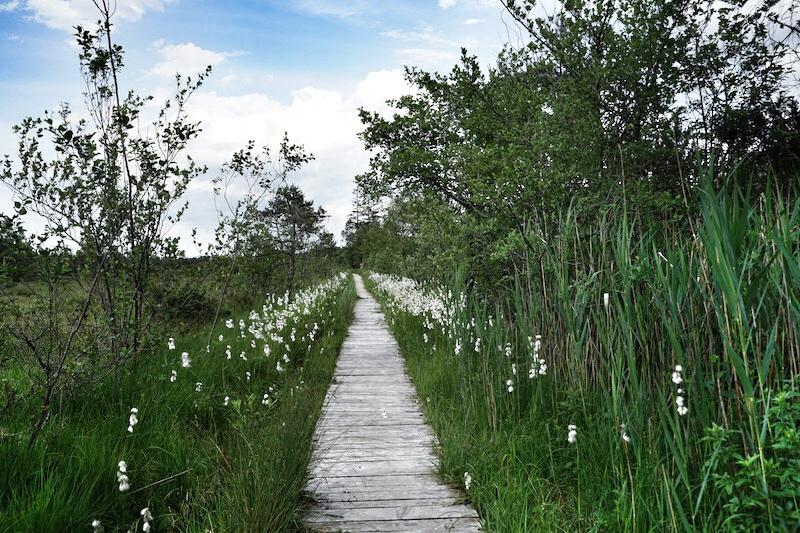 Moorrundweg in Grassau: Ein schöner Pfad führt durch das Moorgebiet