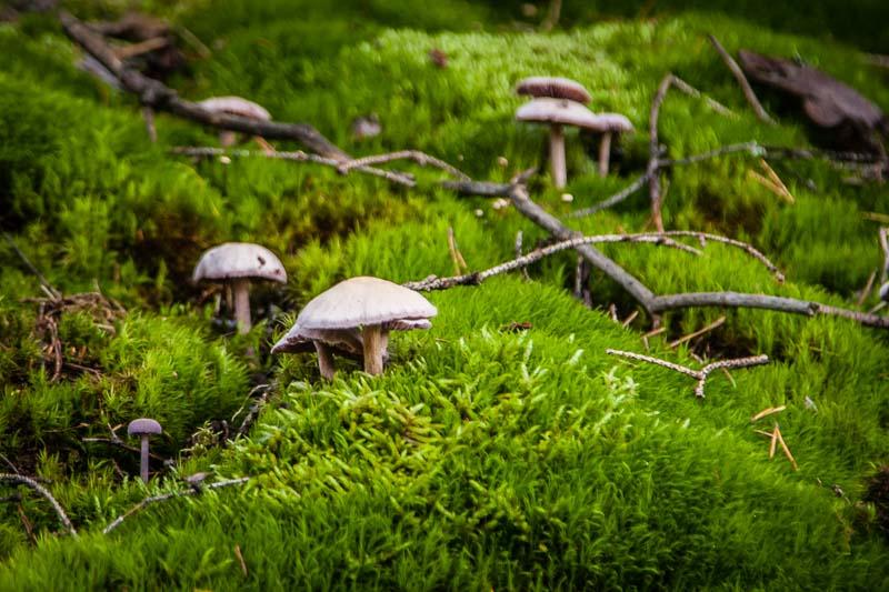 Aus dem Oberpfälzer Märchenwald. Pilze im Waldnaab-Tal