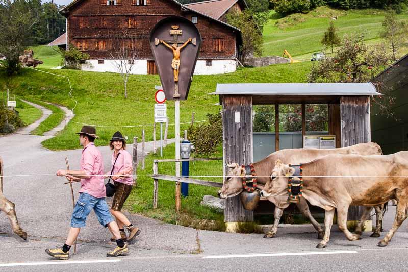 Alpabtrieb in Hittisau. Die Jugend holt das Vieh von der Alm und die schönste Kuh wird geschmückt. Das Wartehäuschen auf diesem Foto bekommt keinen Schönheitspreis – aber in der Nachbargemeinde Krumbach gibt es Bushaltestellen in Weltklasse-Architektur!