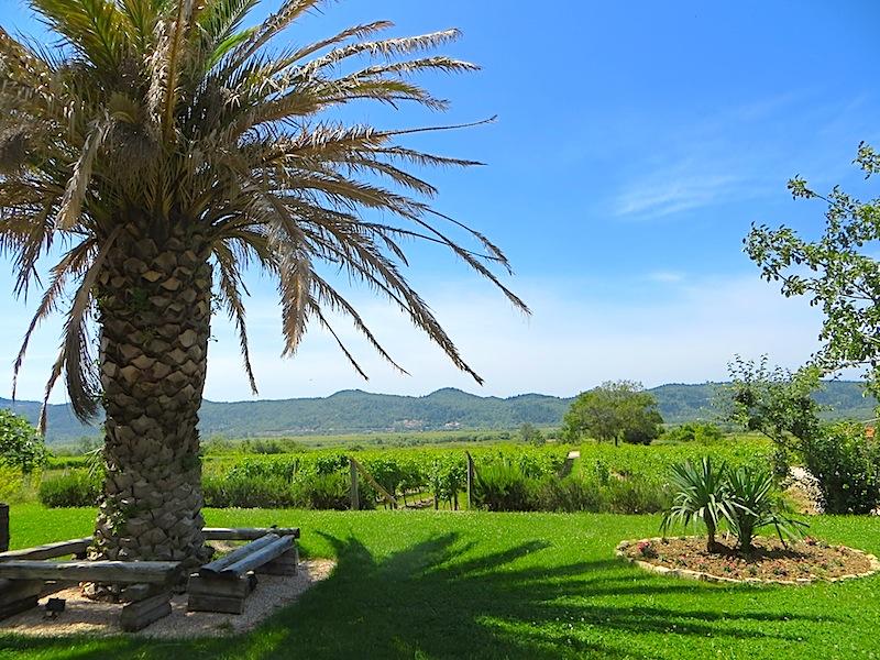 Das Karaman Weingut im Konavle Tal - die Palmen lassen gar kein Weingut vermuten / © Redaktion Lustfaktor, Bild Lisa Sch