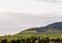 Julius-Echter-Berg, die berühmteste Lage des Weinguts Hans Wirsching / © frontrowsociety.net, Foto: Georg Berg
