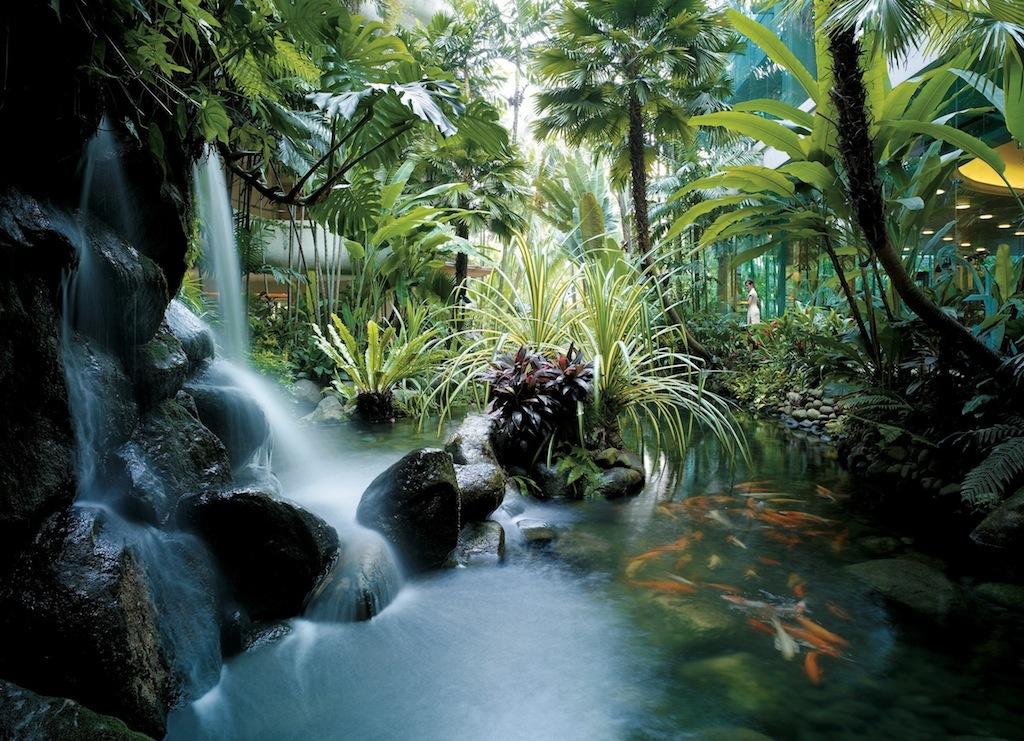 Mehr als 200 japanische Kois leben in den Teichen der Hotelanlage, welche von Wasserfällen gesäumt sind