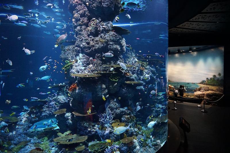 Eines der größten Aquarien der Welt: Das S.E.A. Aquarium auf der Insel Sentosa ist ein Besuchermagnet