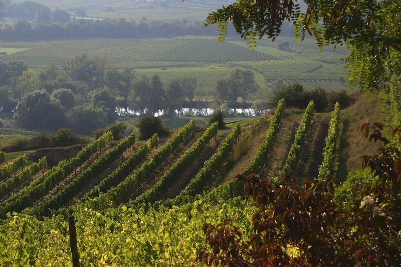 Hier in den Weinbergen um Langenlois betreibt Willi Bründlmayer biodynamischen Weinbau