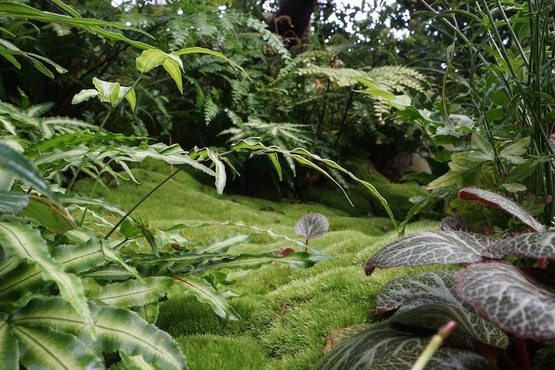 Fahne, Gräser und Moose in zarter Schönheit gedeihen in dem tropischen Claud Forest prächtig
