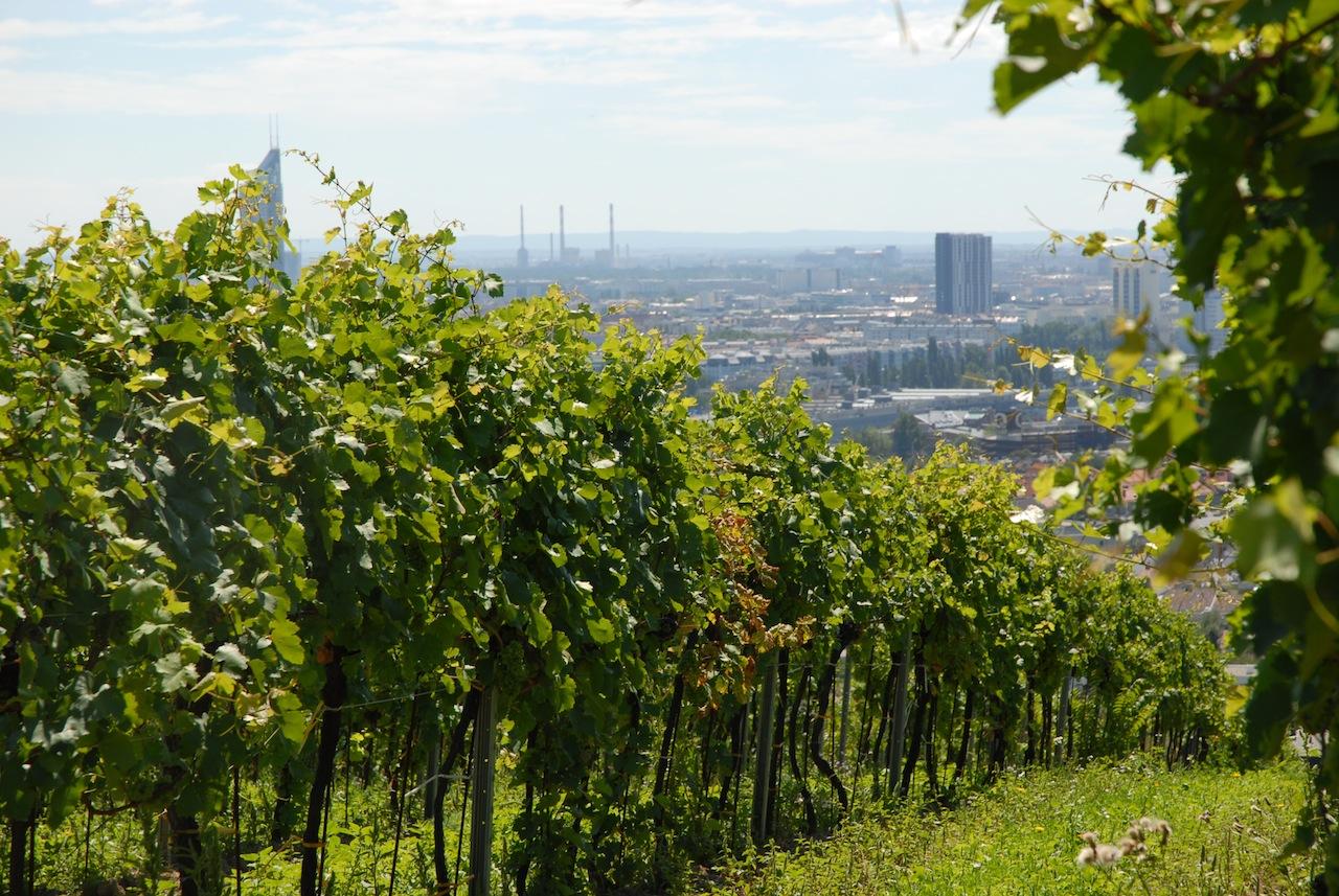 Ein beschaulicher Platz, der Nussberg, einer der berühmten Wiener Weinberge