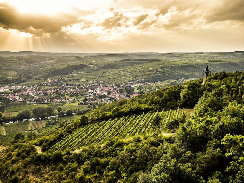 Vom Gipfel des Zörbiger Heiligensteins hat man einen weitläufigen Blick über das Kamptal und Langenlois