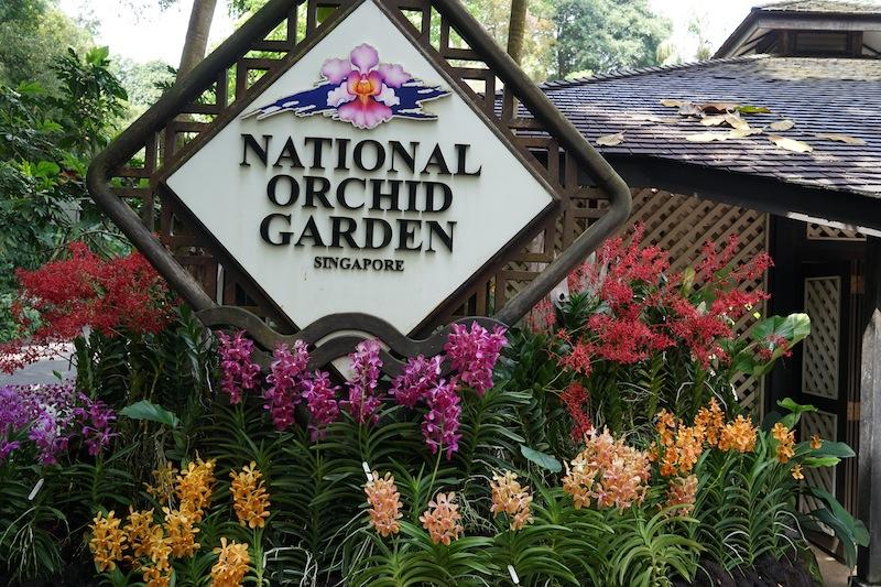 Der Orchideengarten im Botanischen Garten ist ein Muss. Hier finden sich eine Vielzahl der auf der Welt vorkommenden Orchideen wieder und auch Orchideenarten, die nur hier beiheimatet sind