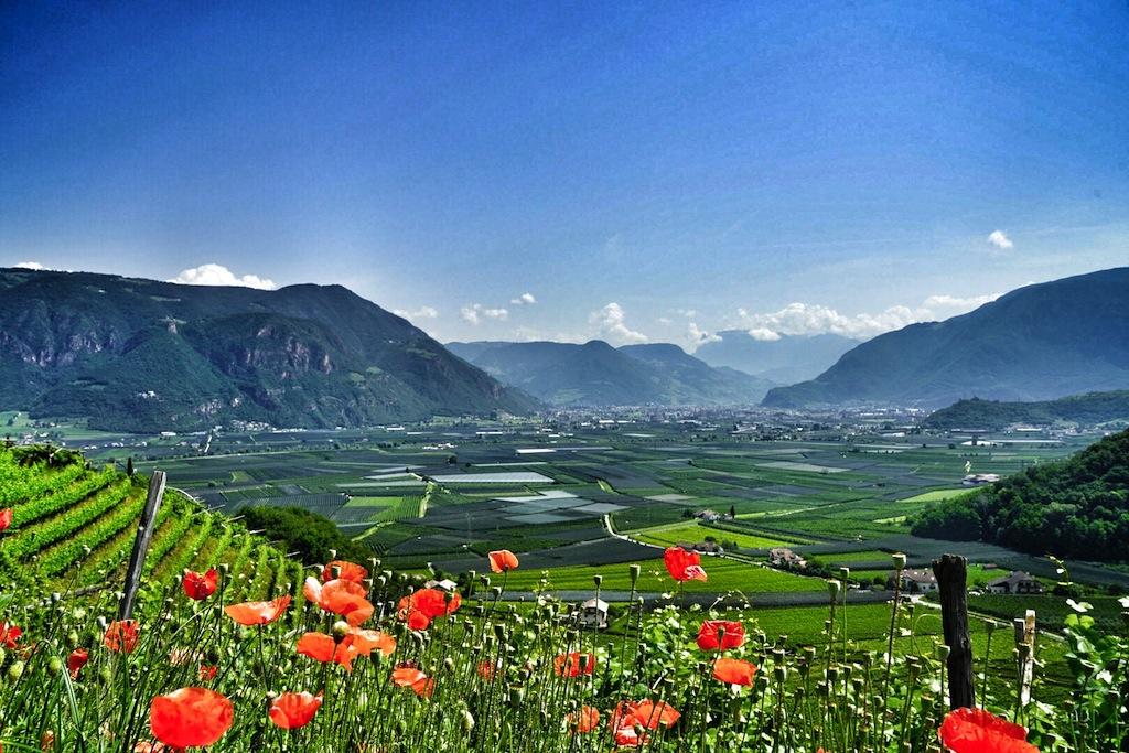 Wein- und Obstbau haben im malerischen Südtirol Tradition