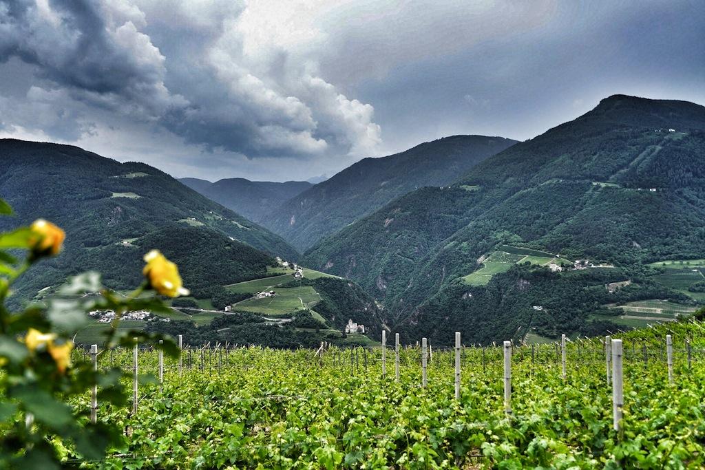 Weinausnahmejahr 2015 - optimale Witterungsverhältnisse rund ums Jahr ließen bemerkenswerte Weine entstehen