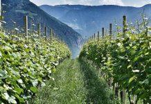"""""""Wein ist die edelste Verkörperung des Naturgeistes"""" Friedrich Hebbel /"""
