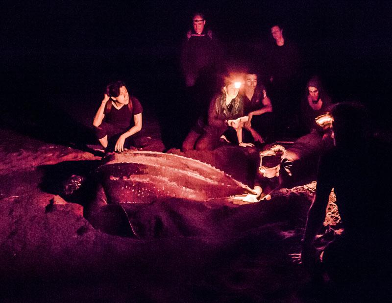 Andächtige Stimmung im Dunkeln in der Gegenwart des schnaufenden Wesens, das wie eine Erscheinung aus dem Ozean aufgetaucht ist. Schon vor den ersten Dinosauriern haben sich die Lederschildkröten hier in gleicher Weise fortgepflanzt. (Das Foto ist mit langer Belichtung aufgenommen worden und lässt wesentlich mehr erkennen, als man in der Nacht mit bloßem Auge sehen konnte) / © FrontRowSociety.net, Foto: Georg Berg