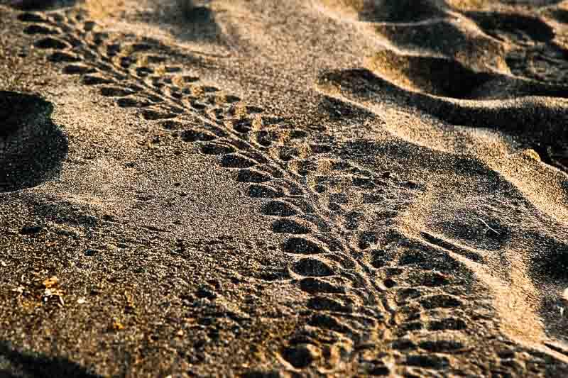 Spuren am Strand. Schon menschliche Fußabdrücke können ein schwer überwindliches Hindernis sein. Deutlich zu erkennen sind die Flossenabdrücke und der Kiel unter dem Panzer. Er sorgt im Wasser für eine gute Hydrodynamik / © FrontRowSociety.net, Foto: Georg Berg