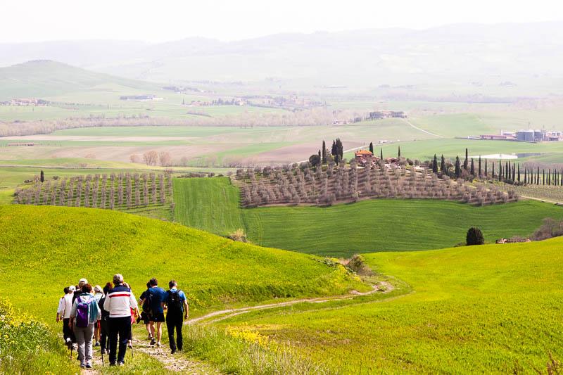 Die Felder noch grün, die Olivenbäume noch braun. Bald wird es umgekehrt sein / © FrontRowSociety.net, Foto: Georg Berg