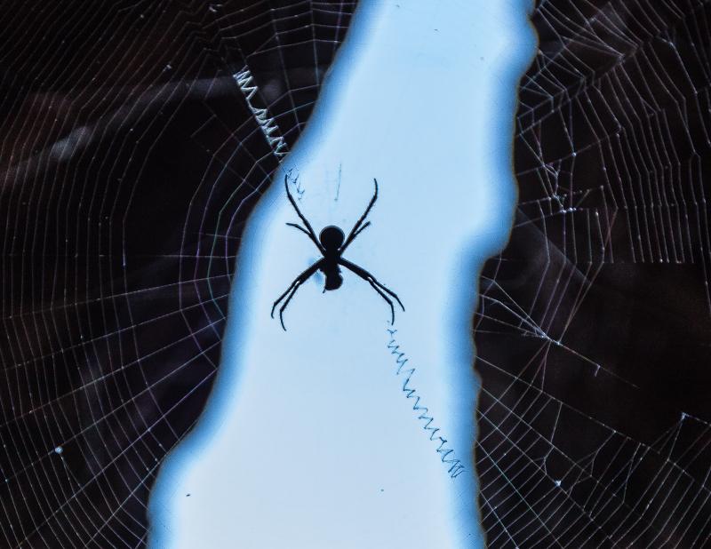 Die Andreaskreuz-Spinne hat ihr Netz mit spiraligen Fäden verstärkt / © FrontRowSociety.net, Foto: Georg Berg
