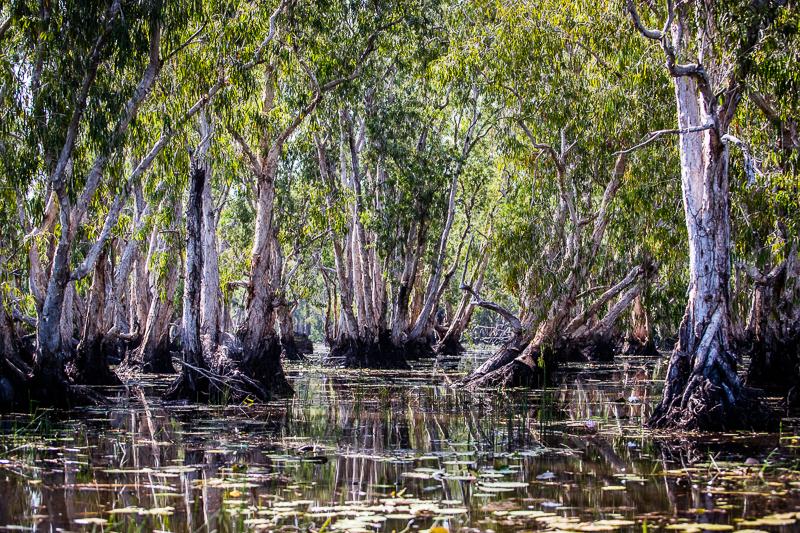 Still gleitet das Boot durch den Wald im Wasser / © FrontRowSociety.net, Foto: Georg Berg