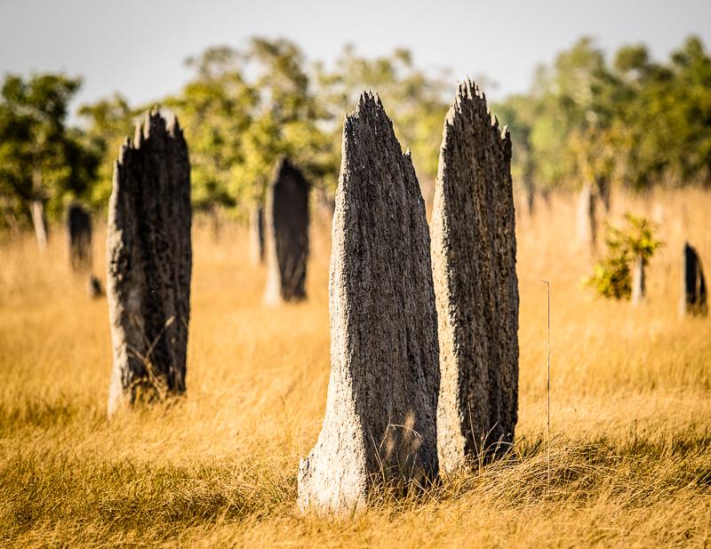 """Die """"magnetischen Termiten"""" bauen ihre schmalen Hügel exakt in Nord-Süd-Richtung / © FrontRowSociety.net, Foto: Georg Berg"""