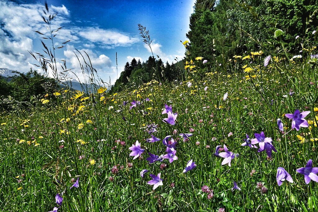 Bunte Mischung: Würzige Kräuter und Blüten spielen eine große Rolle in der Alpenküche
