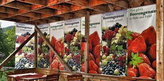 Mair's Beerengarten in Rietz - die Tiroler Früchtespezialisten