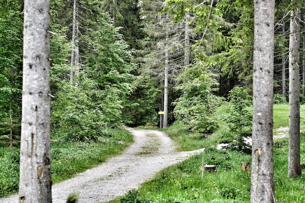 Direkt vom Hotel aus führen Wanderwege und Nordic Walking Strecken in die unnachahmliche Natur