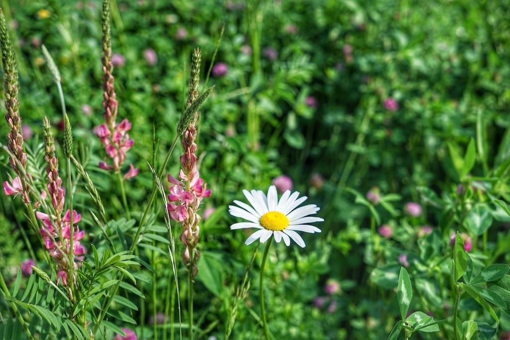 Renate entlockt jeder Art von Alpenkräutern ihre Geheimnisse