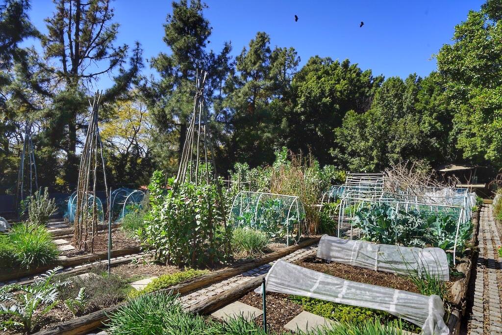 Der hoteleigene Gemüse- und Kräutergarten, auf einem ausgedehnten Dachgarten des Parkhauses, wird von Chef JT täglich aufgesucht