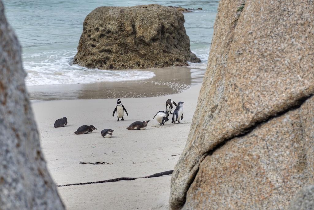 ... aber am Strandabschnitt kommt man den possierlichen Tierchen