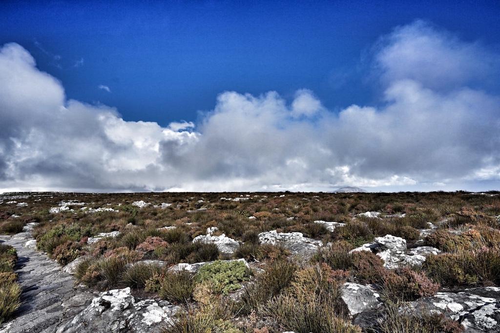 Der Tafelberg ist ein einziges Wandergebiet, ...
