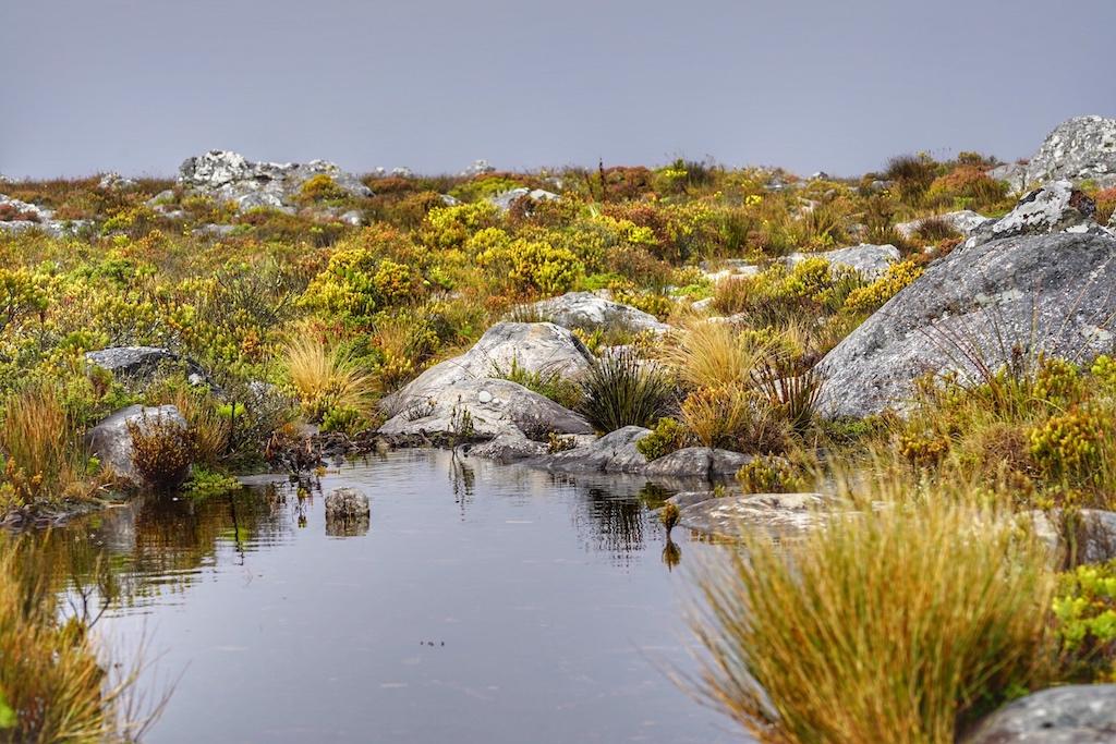 ... vorbei an kleinen Wasserstellen, erlebt der Besucher hier eine einmalige Vegetation und absolute Stille