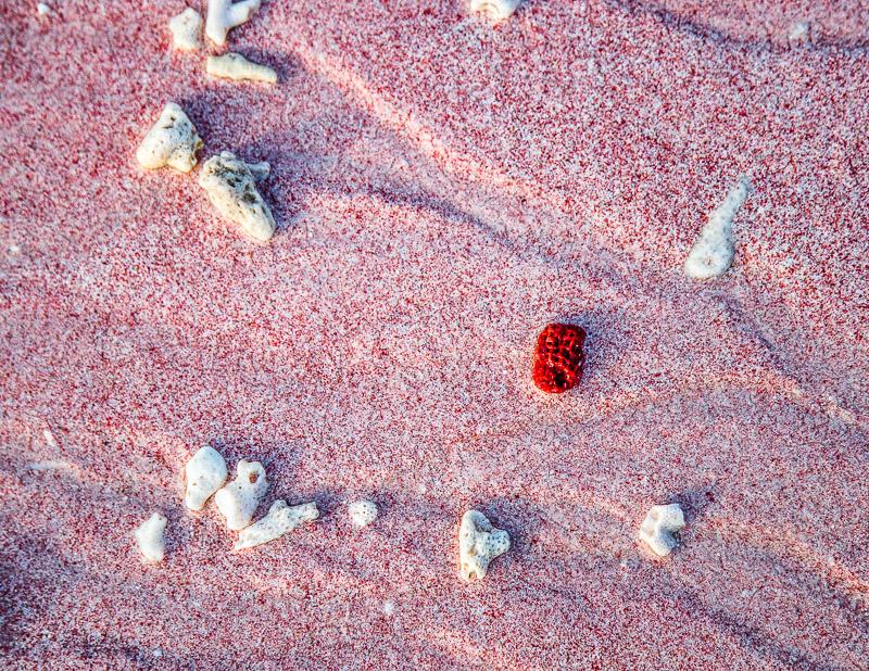 Beim genaueren Hinsehen erschließt sich das Geheimnis der Farbe. Wie an jedem Strand setzt sich auch hier der Sand aus den Zerfallsprodukten der Umgebung zusammen. Teilchen der roten Orgelkoralle sorgen mit ihren Pixeln zum rosa Gesamteindruck des Strandes. Die Tubipora Musica gehört zu den gefährdeten Arten und kommt fast nur noch in diesem Teil der Erde vor / © FrontRowSociety.net, Foto: Georg Berg