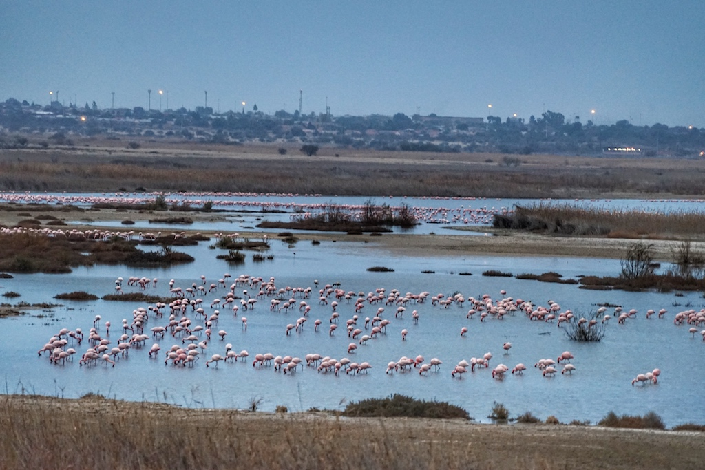 An Kimberleys Wasserreservat fährt der Zug betont langsam vorbei, damit sich auch jeder Gast am Anblick der Flamingos erfreuen kann