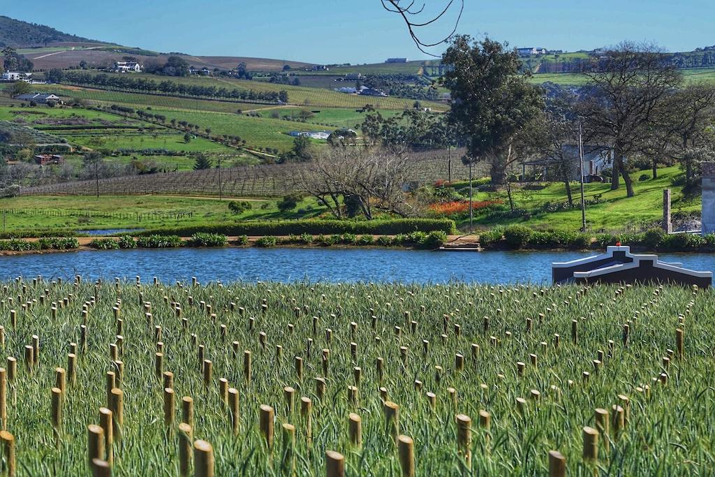 Die Terrasse des Weinguts gibt einen herrlichen Blick auf die Region Stellebosch frei