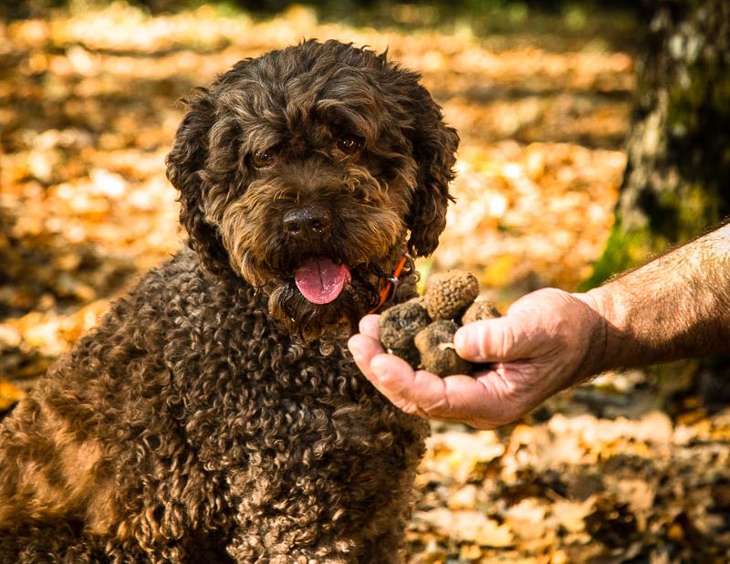 Trüffeldame Elfe ist 9 Jahre alt. In der Ausbildung werden die Hunde auf den Geruch der reifen Trüffel geschult. Die Hunde können Trüffel in einer Tiefe von 10 bis 12 Zentimeter anzeigen / © FrontRowSociety.net, Foto: Georg Berg
