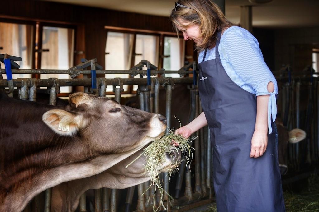 ... die Milch zur Herstellung von Käse; beides sind Produkte aus der Natur ohne Zusätze