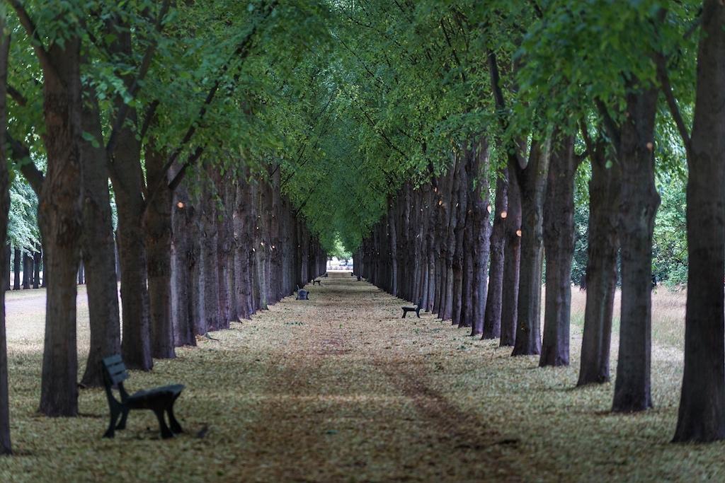 Die Herrenhäuser Allee wurde vierreihig angelegt. So führen 3 Spuren durch den Georgengarten: eine Spur für Fußgänger, eine Spur für Reiter und die letzte Spur war Kutschen vorbehalten / © Redaktion FrontRowSociety.net