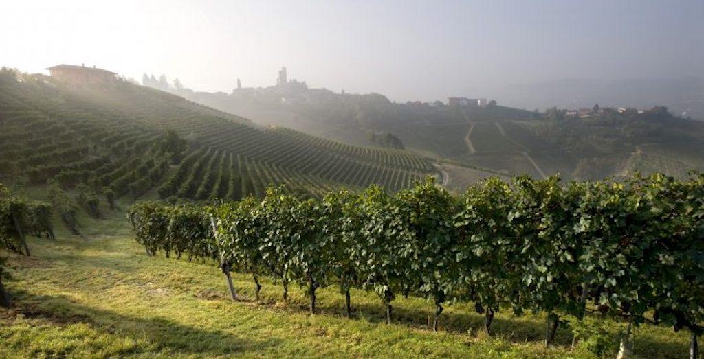 Malerische Weinberge sind markant im Piemont. Familie Vietti setzt auf hochqualitative Weine aus ersten Lagen bei der Herstellung ihrer edler Tropfen / © Vietti
