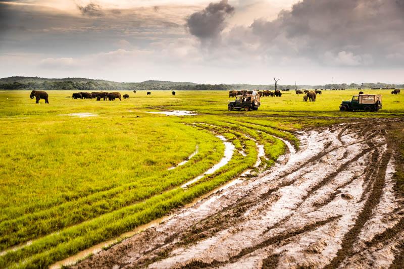 Ob genau so viele Jeeps wie Elefanten im Minneriya Nationalpark unterwegs sind, lässt sich schwer sagen. In der weiten Ebene haben wir jedenfalls mehr als 100 Elefanten gesehen / © FrontRowSociety.net, Foto: Georg Berg