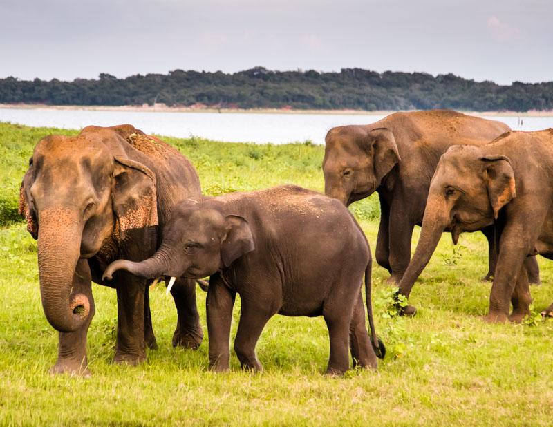 Im offenen Jeep stehend kommt man den wilden Elefanten recht nah / © FrontRowSociety.net, Foto: Georg Berg