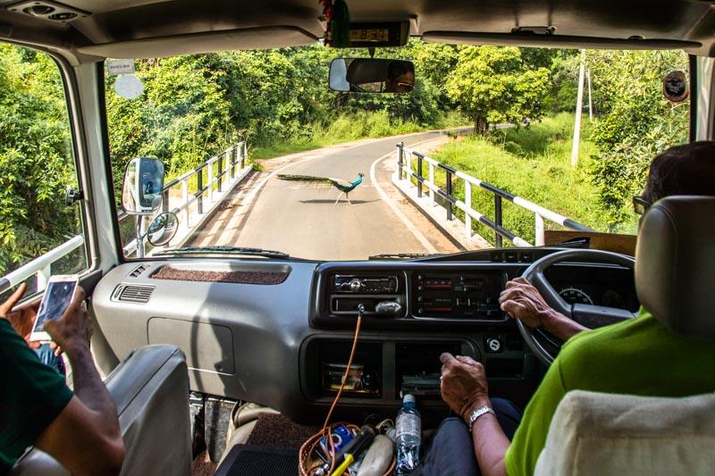 Schmale Straßen oder auch mal ein Pfau, der langsam über den Asphalt schreitet, sorgen für Entschleunigung / © FrontRowSociety.net, Foto: Georg Berg