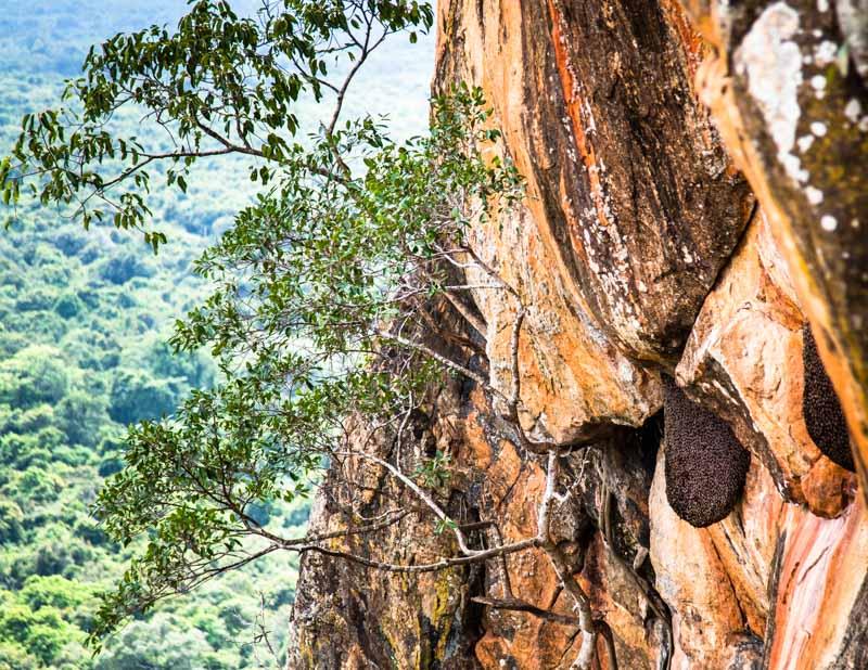 An der steilsten Stelle haben wilde Bienen ihr Nest gebaut / © FrontRowSociety.net, Foto: Georg Berg