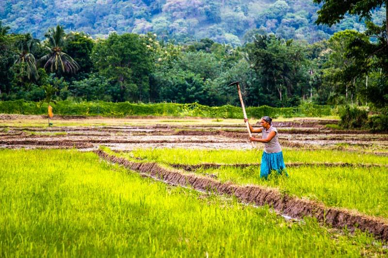 Bäuerin bei der Vorbereitung eines Reisfeldes / © FrontRowSociety.net, Foto: Georg Berg