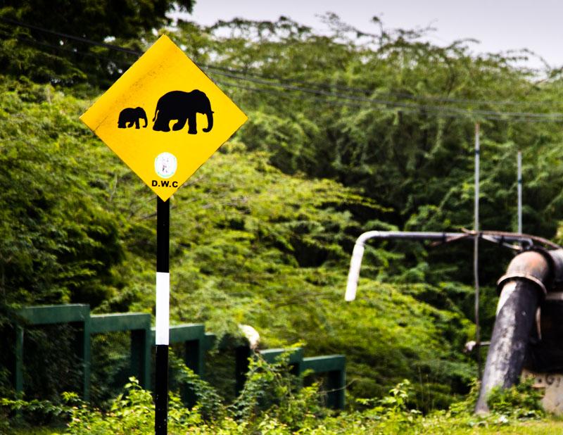 Erste Hinweise auf wilde Elefanten begegnen uns sogar auf einer der wenigen Autobahnen Sri Lankas / © FrontRowSociety.net, Foto: Georg Berg